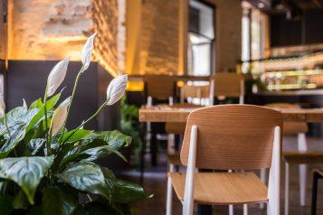 interior restaurante la antojeria silla planta